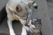 cuccioli ♥