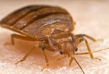 Articles and news / Up to date news on bed bug outbreaks from around the world.