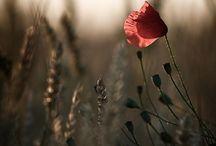 Nature's Beauty / by Julie Stoutenburgh