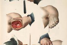 insan anatomisi