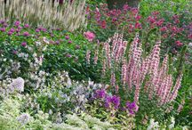 """""""Hill and Border Gardens / Landscaping ideas"""