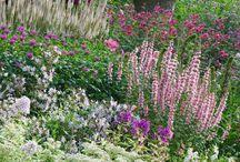 In the garden of perennial borders
