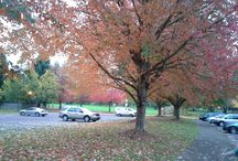Eugene, Oregon / My favorite places