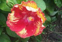 Mix and Match your Flowers Arrangement