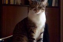 Mina l'aristocratica della zona industriale / La mia gatta e tutte le sue stranezze