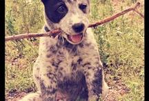 Doggie lover