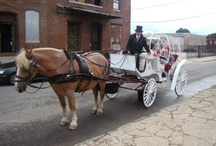 Our Horse Drawn Carriages