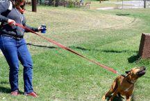 Výcvik psa a jiné