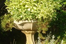 Container Gardening / Container gardening ideas