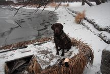 Hunting & Stella