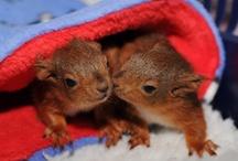 Eekhoorns!!