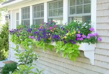 Gardening: Window Boxes