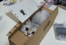 adorable--more