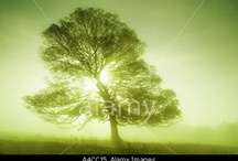 Nature / by Alamy
