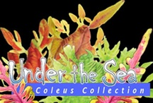 Under the Sea Coleus / by Hort Couture