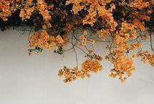 Colour Trend: Orange / We love orange, whether it's orange flowers or orange anything else!