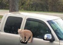 utazó maccsok