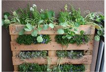 Pallet vertical gardens