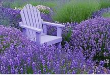 ❧ Garden + Flowers + Landscaping ❧