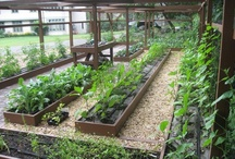 Kitchen gardening / Traditional vegetable and herb gardens