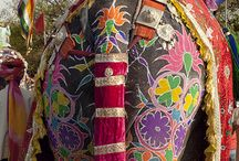 colours of India / by Rituparna Biswas