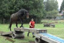 koński trening