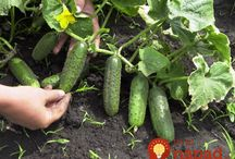 rady do zahrady a pokojové rostliny