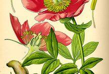 Beautiful flower illustrations