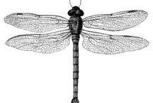 | insectarium