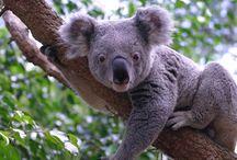 koalák, pandák,delfinek.
