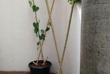 plantas y pergolas