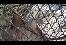 Фото и видео с прикольными животными / Интересные моменты из жизни зверей...