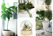 Ideas to Incorporate Indoor Plants in your Home / http://sothebysrealty.ca/blog/2013/11/29/ideas-to-incorporate-indoor-plants-in-your-home/