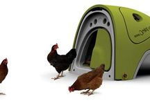 Chicken Coops / Inspiring chicken coop design / by The Little Hen House