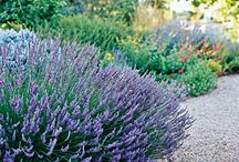 Garden and yard ideas I can't wait to use