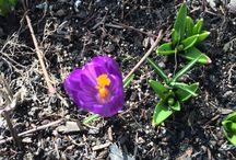 Spring time at the Old Manse Inn / Post your favorite photos of spring time around the Cape / by Old Manse Inn