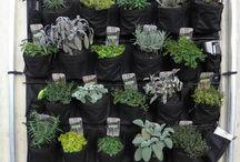 piante aromatiche in casa balcone giardino