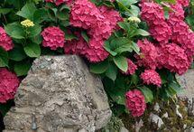 Flowers and gardens / Rostliny na zahradě