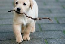 de schatigste hondjes van de wereld