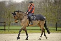 Paard / Alles voor, met en bij het paard