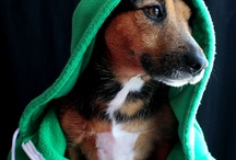 Loveable Dogs (My photos) / Our #dogs and others we can't resist. More can be found at http://www.shadyridgephotography.com