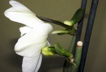 Сад Цветы Орхидеи