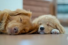 ♥ My Dogs ♥