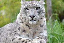 Animals / by Jessica Salisbury