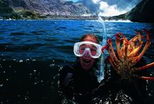 ETG Food & Wine New Zealand / E: travel@exclusivetravelgroup.com | Tel: +64 (7) 579 3320 | USA Tollfree: 1-866 5317 498 Yes you can dive for a crayfish if you want! You'll find it so much easier though, to order it from a restaurant menu. Fresh, succulent, prepared to perfection! The bounteous supply of fresh produce on New Zealand's doorstep keeps the world-class restaurants in supply. From delicious seafood, lamb and beef, garden fresh vegetables and sun ripened fruit. All accompanied by our superb award winning wines.