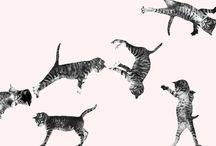 Acro-Cats