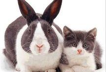 králík a kotě