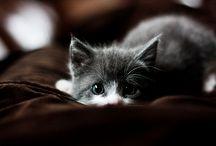 Katzen und andere Schätze