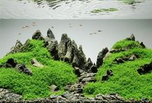 Aquarium Stuff >>$$$<> / Inspiration and information related to freshwater aquaria.