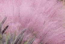 Ornamental Grasses / Great grasses for texture, movement, color and off-season interest in the garden, plus related tips. / by Horticulture Magazine